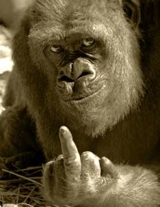 Hitraya Gorilla